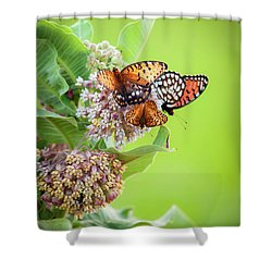 Butterfly Buffet II Shower Curtain