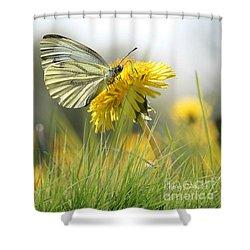 Butterfly On Dandelion Shower Curtain