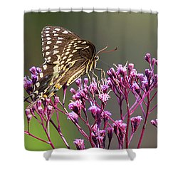 Butterfly On Wild Flowers Shower Curtain