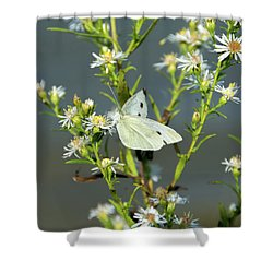 Cabbage White Butterfly On Flowers Shower Curtain