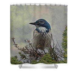 California Scrub Jay - Vertical Shower Curtain
