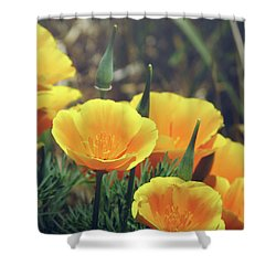 Californian Poppies In The Patagonia Shower Curtain