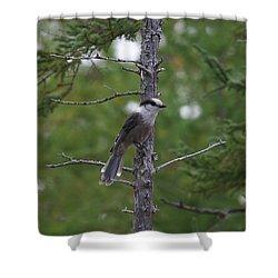 Canada Jay 101305 Shower Curtain