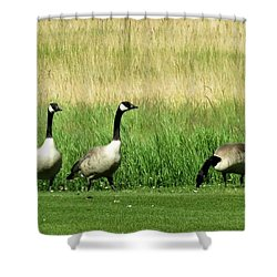 Canadian Geese 3s Company1  Shower Curtain