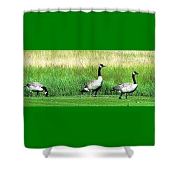 Canadian Geese 3s Company2 Shower Curtain