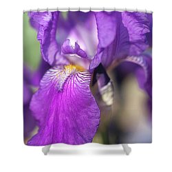 Caprice Closeup The Beauty Of Irises Shower Curtain