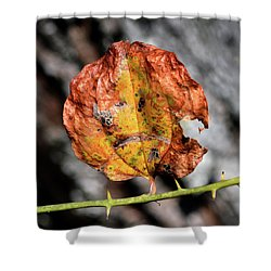 Shower Curtain featuring the photograph Carved Pumpkin Leaf At Gordon's Pond by Bill Swartwout Fine Art Photography
