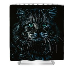 Shower Curtain featuring the photograph Cat by Rob D