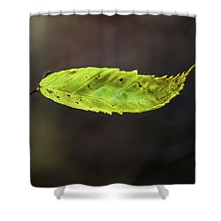 Shower Curtain featuring the photograph Catching Raindrops  by Michael Arend