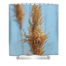 Cattail  Shower Curtain