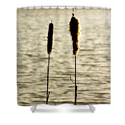 Cattails In The Sun Shower Curtain