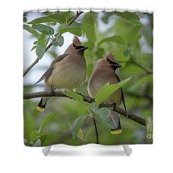 Cedar Waxwings Shower Curtain