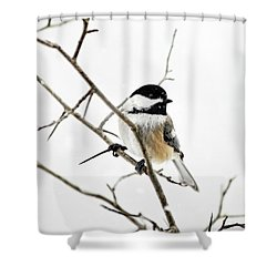 Charming Winter Chickadee Shower Curtain