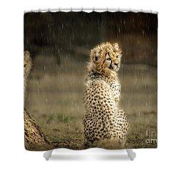 Cheetah Cubs And Rain 0168 Shower Curtain