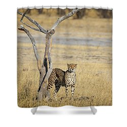Shower Curtain featuring the photograph Cheetah by John Rodrigues