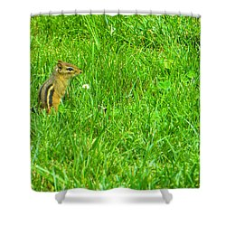 Chipmunk And The Flower Shower Curtain