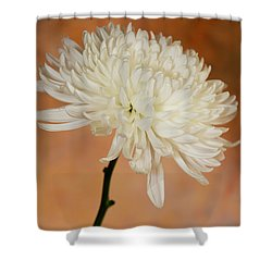 Chrysanthemum On Canvas Shower Curtain
