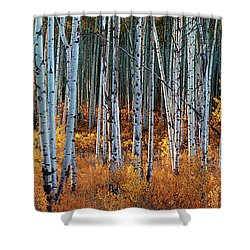 Colorado Autumn Wonder Panorama Shower Curtain