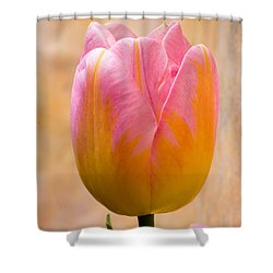 Colorful Tulip Shower Curtain