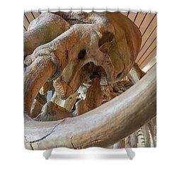 Columbian Mammoth Shower Curtain