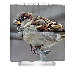 Companion Shower Curtain
