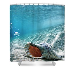 Conch Shell Bubbles Shower Curtain