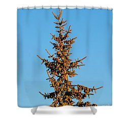 Shower Curtain featuring the photograph Cones by Jon Burch Photography
