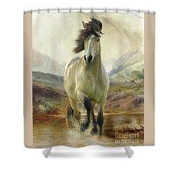 Connemara Pony Of The Moors Shower Curtain