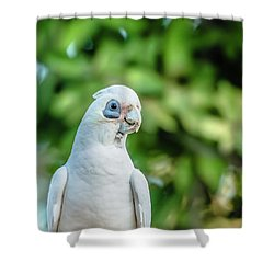 Shower Curtain featuring the photograph Corellas Outside During The Afternoon. by Rob D