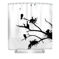 Cormorant's In Silhouette Shower Curtain