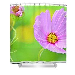 Cosmos Flower In Full Bloom, Bud Shower Curtain