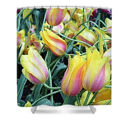 Crazy Tulips Shower Curtain