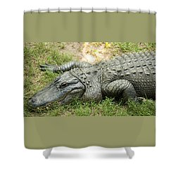 Shower Curtain featuring the photograph Crocodile Outside by Rob D
