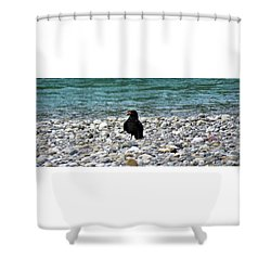 Crow With A Stone Shower Curtain