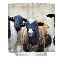 Curious Hair Sheep Shower Curtain