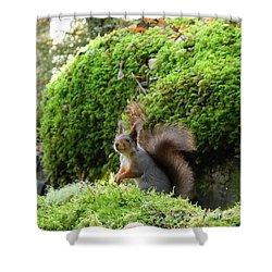 Curious Squirrel Shower Curtain