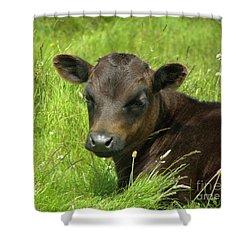 Cute Cow Shower Curtain