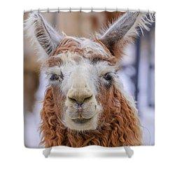 Cute Llama Shower Curtain