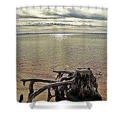 Cypress On The Beach Shower Curtain