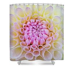 Dahlia Ryecroft Brenda T Flower Shower Curtain