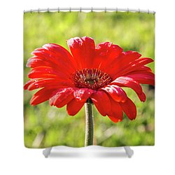 Daisy In The Rain Shower Curtain