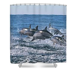 Dancing Dolphins Shower Curtain
