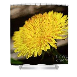 Dandelion In Bloom Shower Curtain