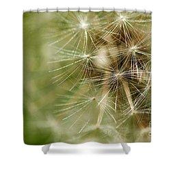 Dandelion Puff Ball Shower Curtain