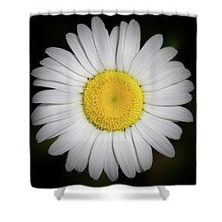 Day's Eye Daisy Shower Curtain