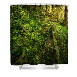 Shower Curtain featuring the photograph Deep In The Forests Of Bavaria by David Morefield