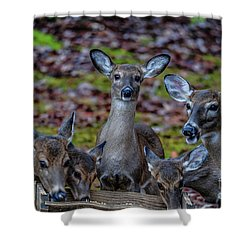 Deer Gathering Shower Curtain