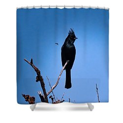 Desert Phainopepla And Dragonfly Shower Curtain