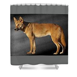 Dingo Shower Curtain