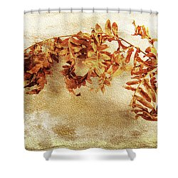 Shower Curtain featuring the photograph Disorderly Order by Randi Grace Nilsberg